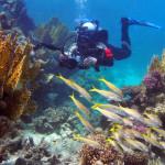 przyłapany fotograf podwodny