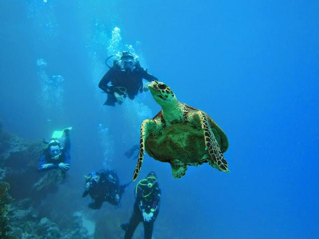 żółw i nurkowie