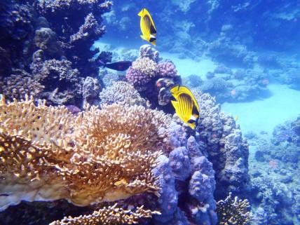 rafa koralowa i ryby