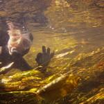 nurek w rzece