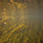 podwodne łąki