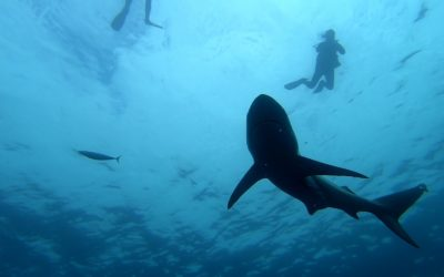 SHARK WEEK RPA 2019!