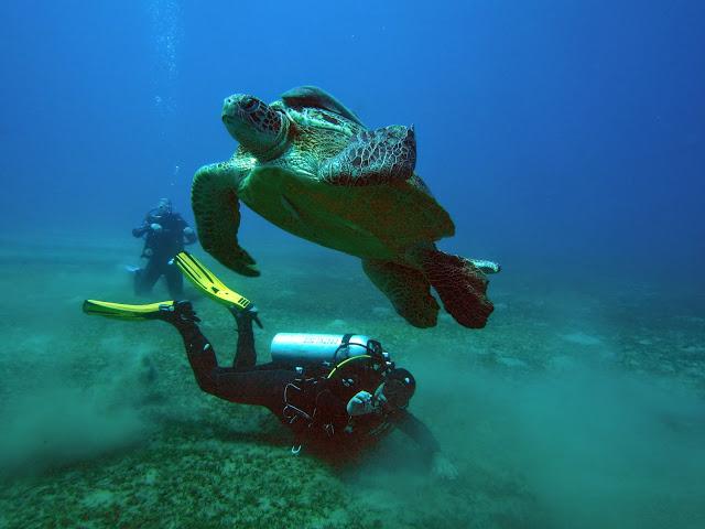 nurkowanie z żółwiami