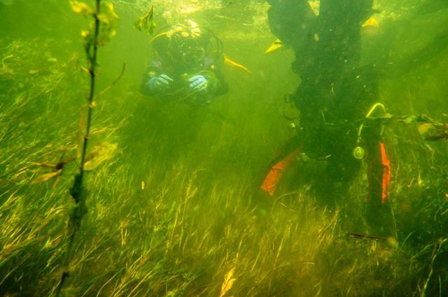 wygłupy pod wodą