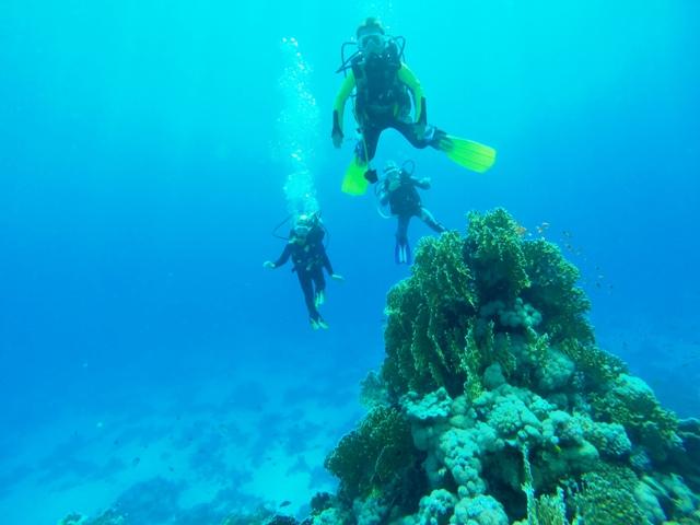 mali zdobywcy raf koralowych w egipcie